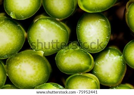 asparagus spears - stock photo