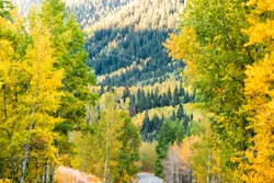 Aspen, Colorado rocky mountains foliage in autumn on trees on Castle Creek scenic road with colorful yellow orange leaves