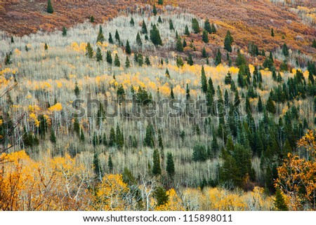 Aspen Grove Late in the Fall from a Distance