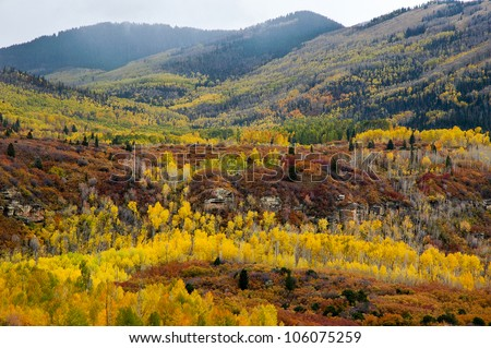 Aspen in fall in the Abajo Mountains, a mountain range west of Monticello, Utah, south of Canyonlands National  Park  a part of the Manti-La Sal National Forest.