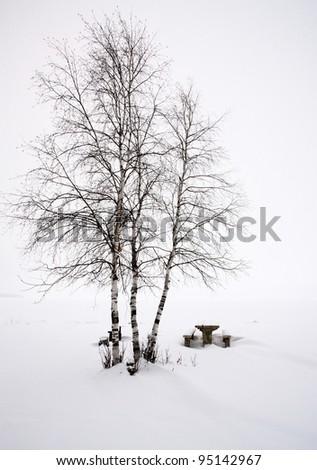 Aspen Trees Canada Saskatchewan Canada Winter path road