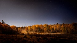 Aspen trees lit up by the moonlight at night. There is a slight haze in the sky and the stars are visible.