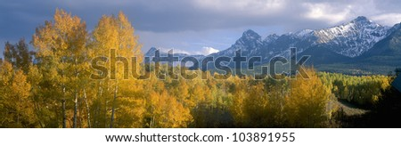 Aspens and clouds at Kebler Pass in Gunnison Nationall Forest, Colorado