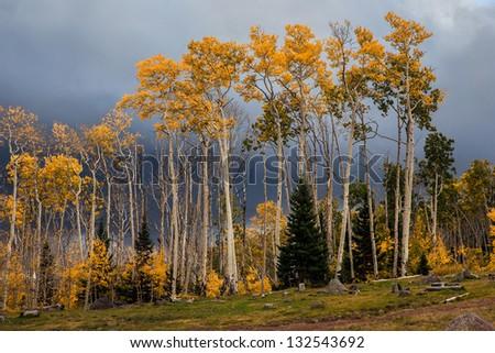 Aspens and storm clouds, Boulder Mountain, Utah