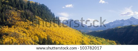 Aspens in Autumn in San Juan National Forest near Telluride, Colorado