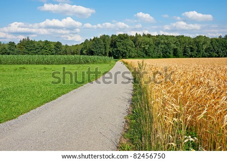 Asphalt Path Between Corn and Wheat Fields in Bavaria, Germany