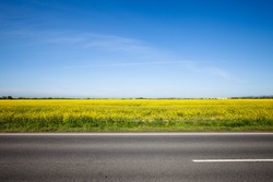 Asphalt road among the summer field. Beautiful countryside landscape