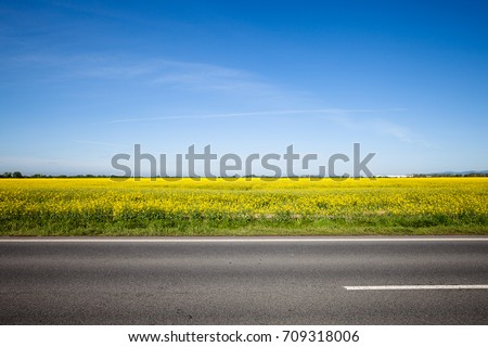 Asphalt road among the summer field. Beautiful countryside landscape #709318006