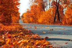 Asphalt road in autumn fall forest with car on horizon. Autumnal background. Selective focus