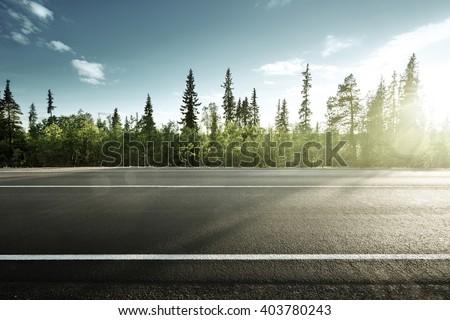 asphalt road in forest