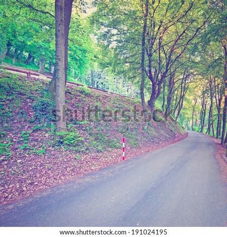Asphalt  Road in the Forest,Instagram Effect - Shutterstock ID 191024195