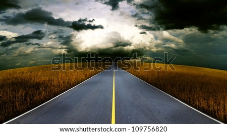 Asphalt road in the meadow.