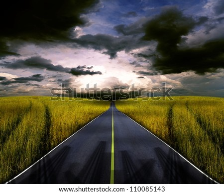 Asphalt road in the meadow.