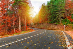 Asphalt road passing through the forest. Colorful leafy trees. Fallen Leaves. Gorgeous autumn image. Exciting. Bursa, Istanbul, Turkey.