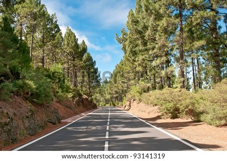 Asphalt road running through coniferous forest, Spain