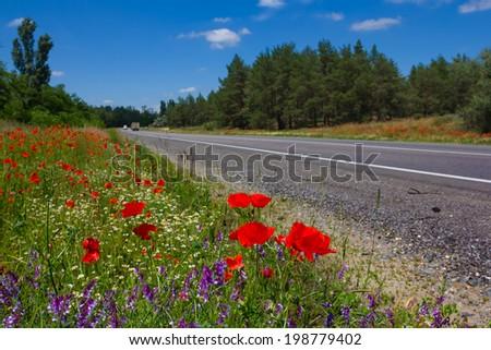 asphalt road through a flowers