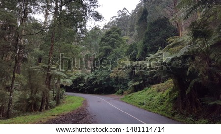 Asphalt road through the jungle with trees and view of nature #1481114714