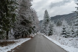 Asphalt road through the middle of the fir trees at the first snow