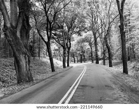 Asphalt road with with double white line and tree alley, in black and white