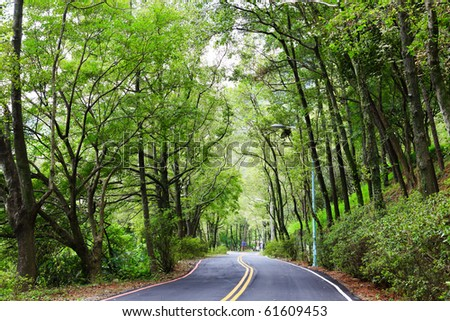 Asphalt winding curve road in a beech green forest