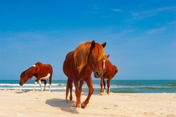 Assateague Island is a 37-mile (60 km) long barrier island located off the eastern coast of the Delmarva peninsula facing the Atlantic Ocean.