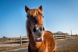 Assateague Island Wild Horse, assateague island MD