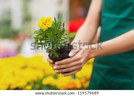 Assistant planting a flower in front of yellow plants in garden center