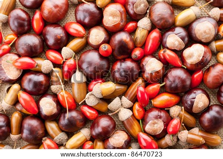 assorted acorns, chestnuts and dogrose background