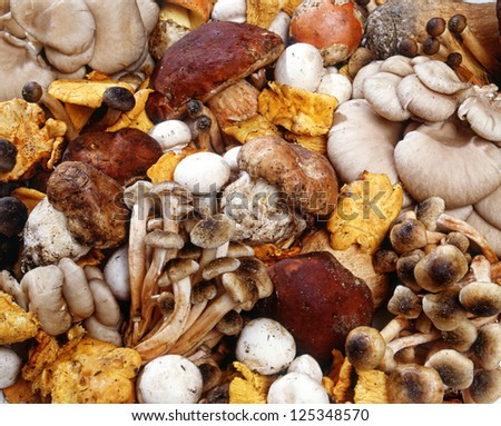 Assorted collection of fresh edible wild mushrooms harvested in autumn for use as ingredients in cooking