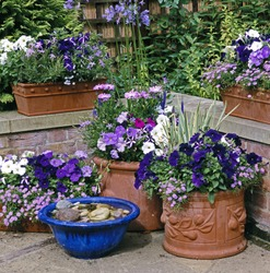 Assorted colorful Planted Containers in a cottage garden