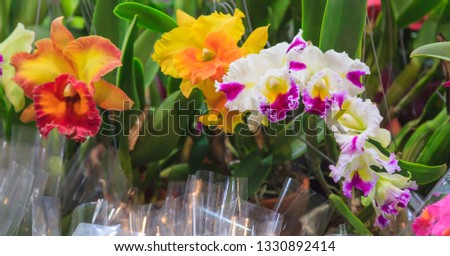Assorted Fresh Colorful Orchid Flowers Background. Floral Arrangement, Wallpaper, Backdrop, Flower Cultivation, Greenhouse, Natural View, Life, Plantation, Agriculture, Gardening and Botany Concept. #1330892414