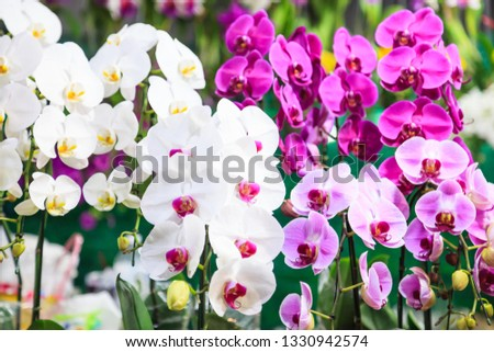 Assorted Fresh Colorful Orchid Flowers Background. Floral Arrangement, Wallpaper, Backdrop, Flower Cultivation, Greenhouse, Natural View, Life, Plantation, Agriculture, Gardening and Botany Concept. #1330942574