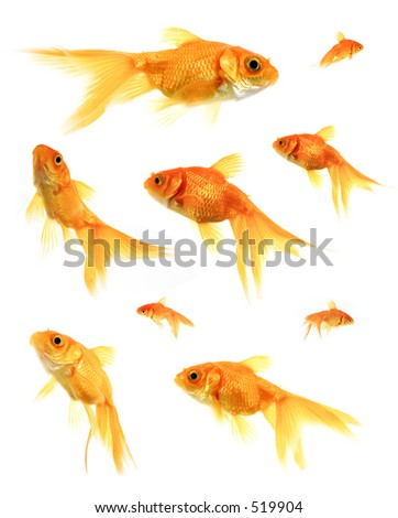 Assorted Goldfish
