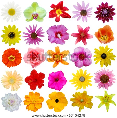 Assorted in 25 flowers style in USA - stock photo