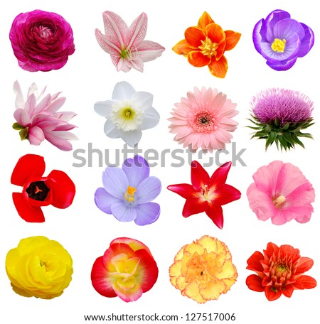 Assorted on America spring flowers