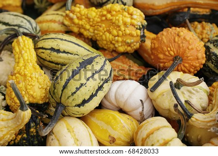 assorted pumpkins at the market - stock photo