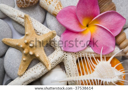 Assorted seashell background shot in high key with a pink frangipani flower for that tropical touch.