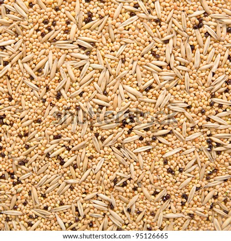 assorted seed for exotic birds - stock photo