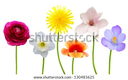 Assorted six spring flowers on white
