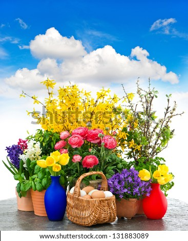 assorted spring flowers and easter eggs decoration over cloudy blue sky. tulips, ranunculus, campanula, forsythia