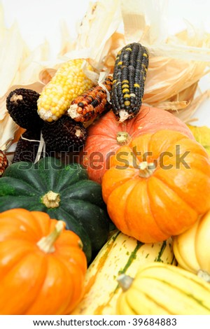 Assorted squash including green and white Acorn, Gold Nugget, Delicata, small pumpkins and colorful Indian corn on a light colored background.