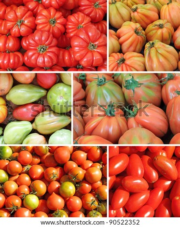 assorted tomato collage, images from mediterranean farmers market