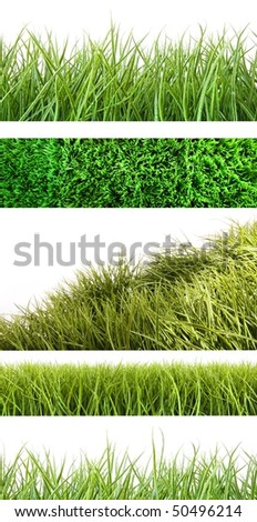 Assortment of different grass on white background