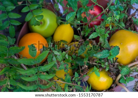 Assortment of different various organic fruits in a flower pot. Colorful bright background. Composition of assorted fresh ripe raw organic fruits. Healthy lifestyle, dieting concept, clean eating. #1553170787
