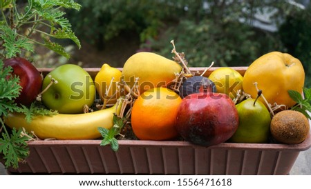 Assortment of different various organic fruits in a flower pot. Colorful bright background. Composition of assorted fresh ripe raw organic fruits. Healthy lifestyle, dieting concept, clean eating. #1556471618