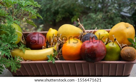 Assortment of different various organic fruits in a flower pot. Colorful bright background. Composition of assorted fresh ripe raw organic fruits. Healthy lifestyle, dieting concept, clean eating. #1556471621