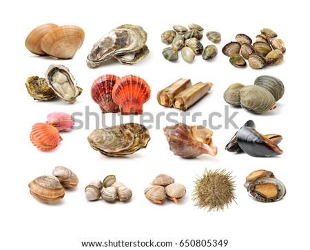 Assortment of fresh shellfish on white background