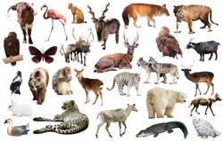 assortment of many kind of asian wild birds, reptiles and animals on white background