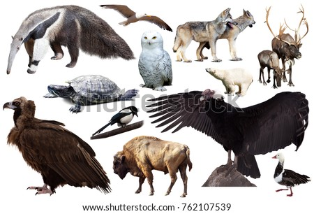 assortment of many north american wild birds and mammal animals isolated on white background