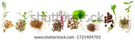 Assortment of micro greens. Set micro greens sprouts and seeds, Growing kale, alfalfa, sunflower, arugula, mustard sprouts. Healthy lifestyle, stay young and modern restaurant cuisine concept Foto stock ©